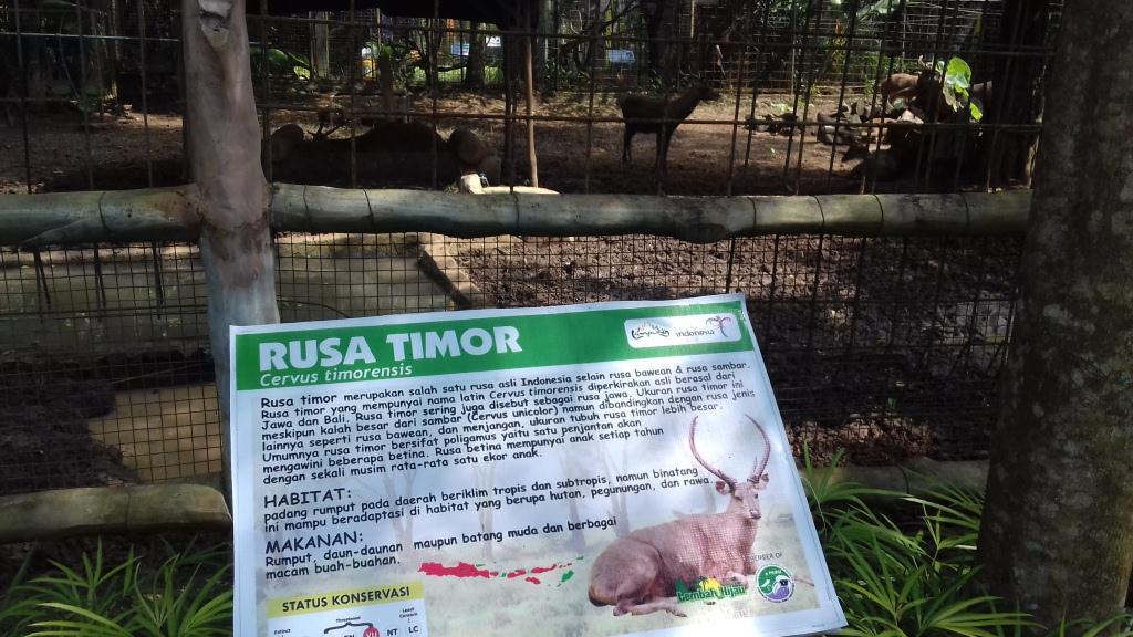 Rusak Timor di Lembah Hijau Lampung